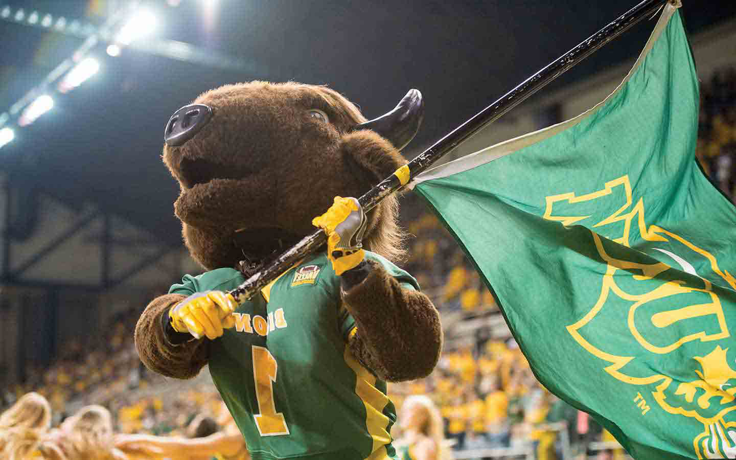 bison mascot with flag